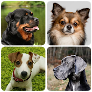 Dog Breeds - Quiz about all dogs of the world! APK