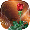 Roses Live Wallpaper  APK icon