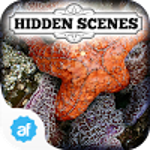 Hidden Scenes Secret Tidepool