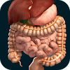 Internal Organs in 3D (Anatomy)