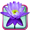 Lotus Live Wallpaper APK icon