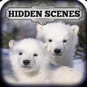 Hidden Scenes - Polar Bears