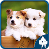 Dogs Jigsaw Puzzles