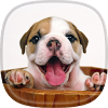 Puppy Live Wallpaper  APK icon