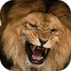 Wild Animal Wallpapers APK