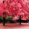 Colorful Nature Wallpapers